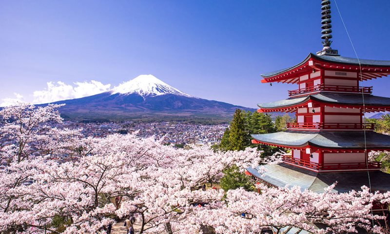 كيف تحصل على منحة للدراسة بكوكب اليابان؟ - STJEGYPT