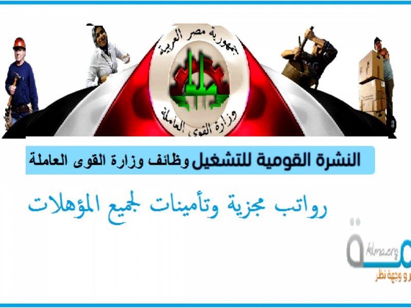 اعلان وظائف وزارة القوي العاملة والهجرة برواتب تصل 5300جنيه - STJEGYPT