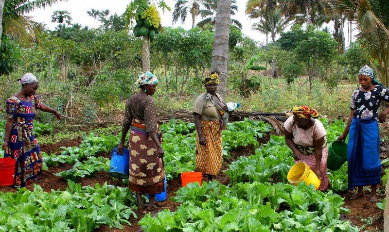 فرصة زمالة للأفارقة لمدة 6 أشهر في مجال الزراعة، 2019 (مدفوعة الأجر) - STJEGYPT
